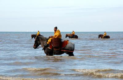 Shrimp fishing on horseback
