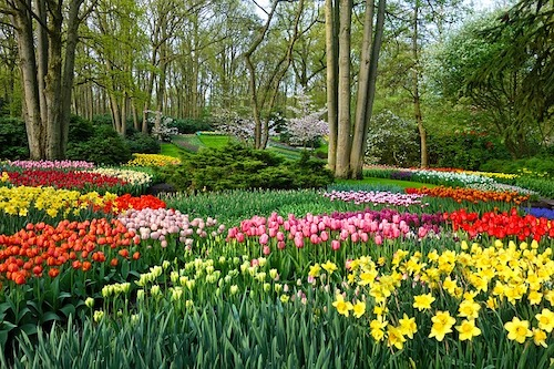 garden-3348404_640