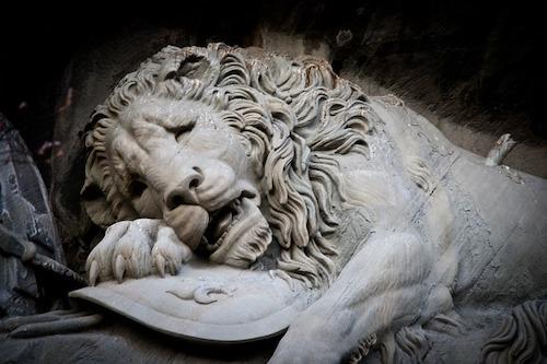 sadness-of-lions-631975_640
