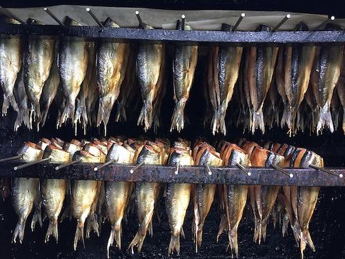 herring-1772802_640